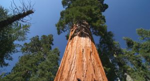 sequoia-national-park-california-usa_main